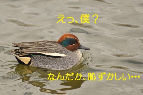 060_20121227213541.jpg