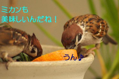 060_20121230221224.jpg