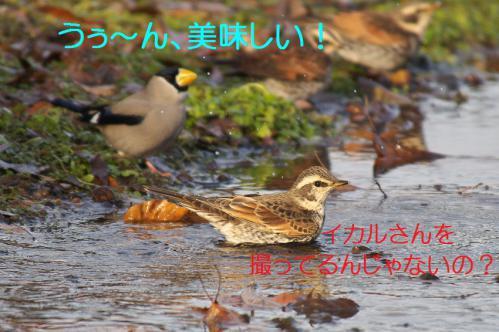 060_20130121215329.jpg