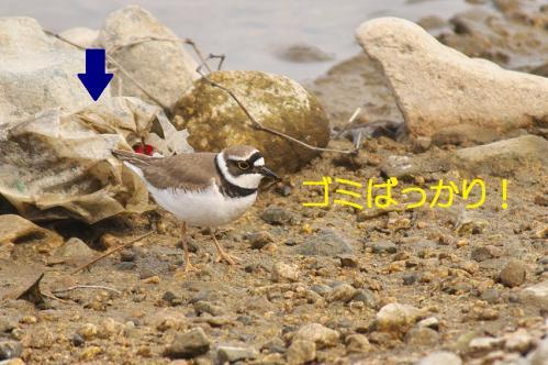 070_20120426195351.jpg