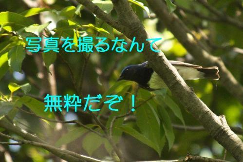 070_20120430195519.jpg