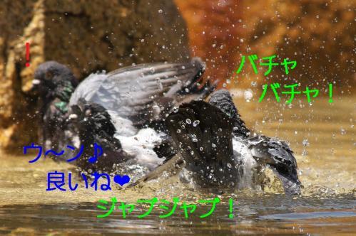 070_20120501203934.jpg