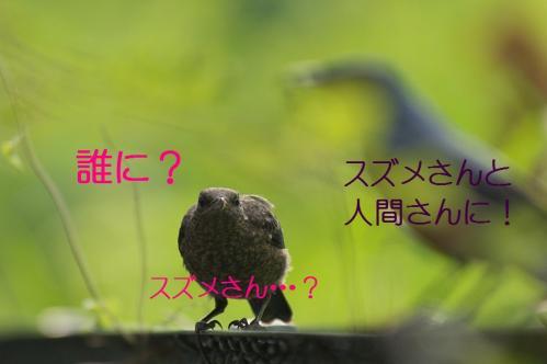 070_20120612215114.jpg