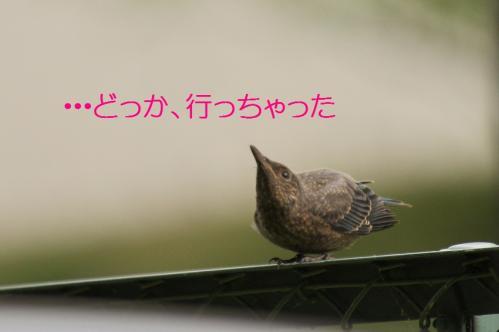 070_20120613233611.jpg