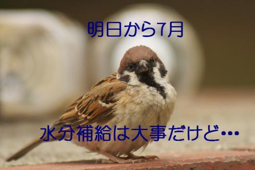 070_20120630222441.jpg