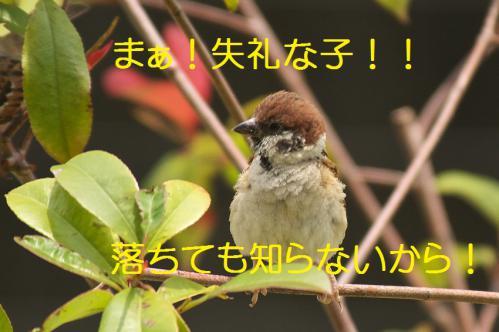 070_20120711222457.jpg