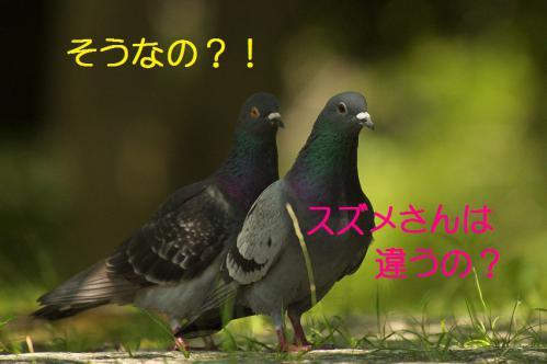 070_20120731204637.jpg