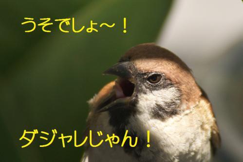 070_20120821211011.jpg
