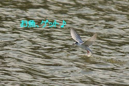 070_20121009191545.jpg
