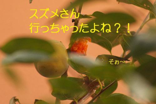 070_20121030223208.jpg