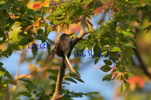 070_20121031214911.jpg