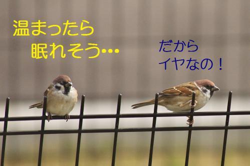 070_20121103224853.jpg