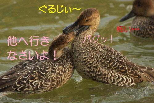 070_20121112215354.jpg