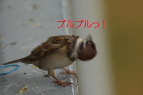 070_20121117212608.jpg