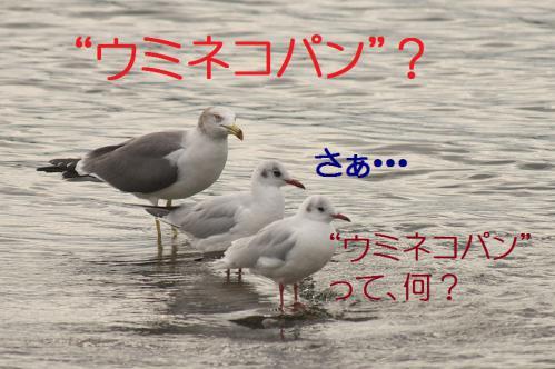 070_20121124215356.jpg