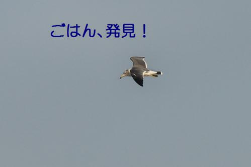 070_20121125192220.jpg