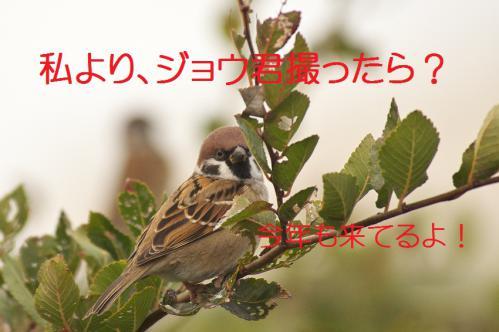 070_20121126223052.jpg