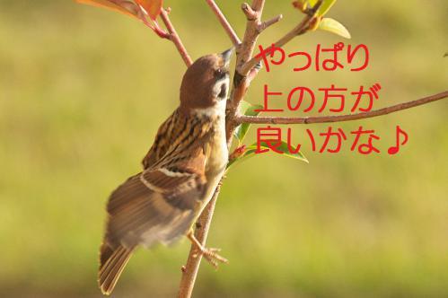 070_20121130220642.jpg