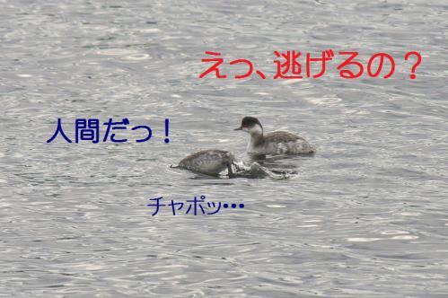 070_20121201214803.jpg