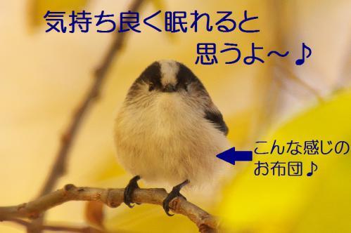 070_20121206193412.jpg