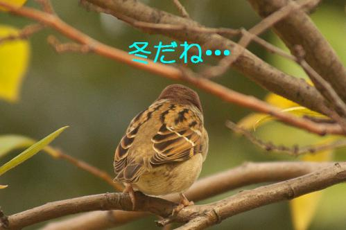 070_20121206230722.jpg