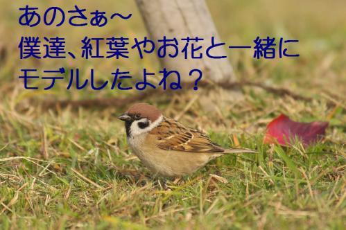 070_20121209222831.jpg