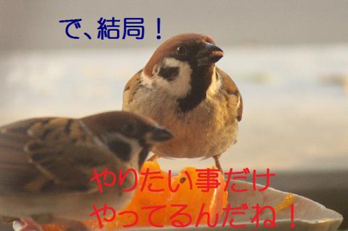 070_20121212214521.jpg