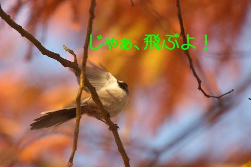 070_20121213213948.jpg