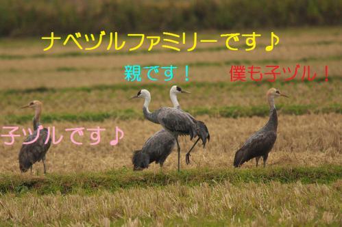 070_20121215200134.jpg