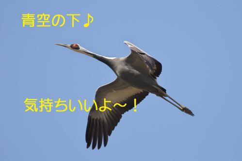 070_20121216202807.jpg