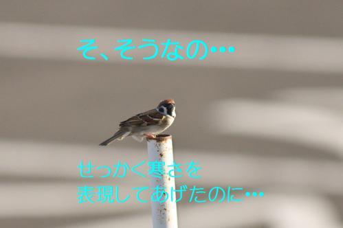 070_20121217024555.jpg