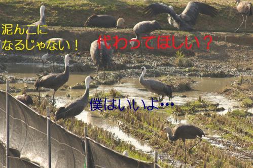 070_20121218215608.jpg