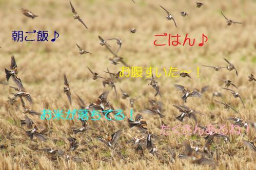 070_20121220193346.jpg