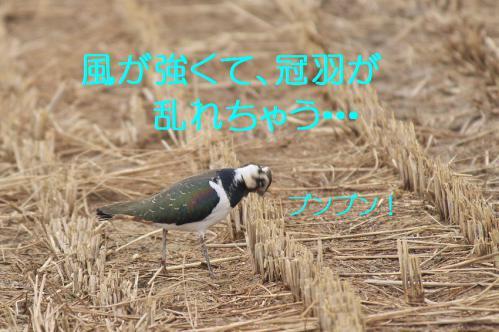 070_20121222194459.jpg