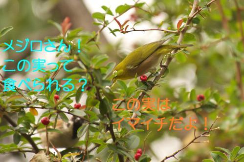 070_20121225223343.jpg