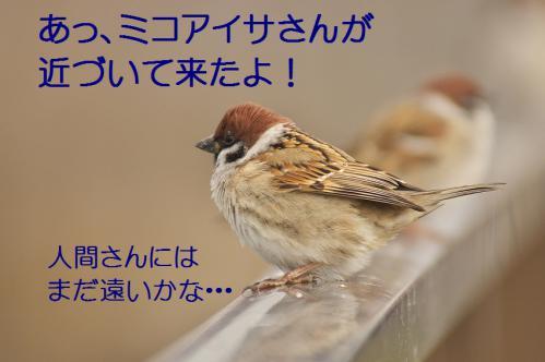 070_20121227213543.jpg
