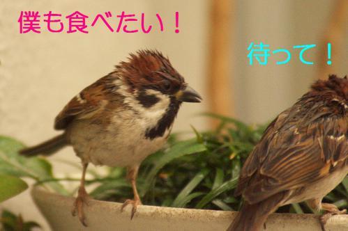 070_20121230221227.jpg