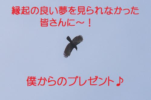 070_20130105211111.jpg
