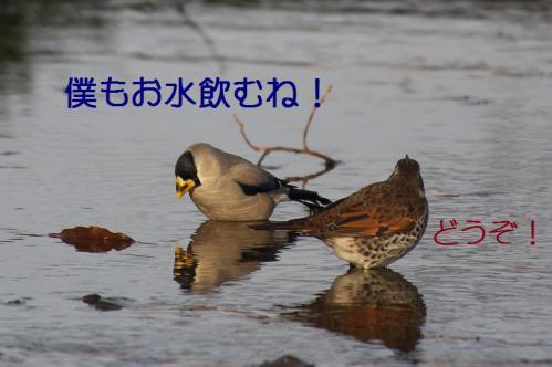070_20130121215331.jpg