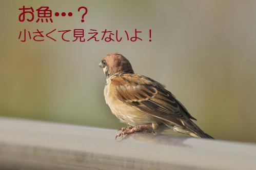 075_20121009191545.jpg