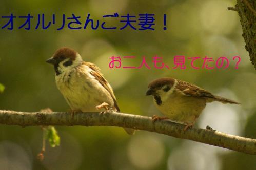 080_20120430195518.jpg