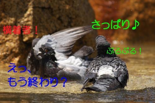 080_20120501203933.jpg