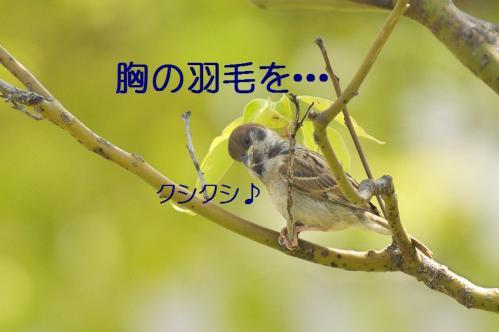 080_20120531225210.jpg