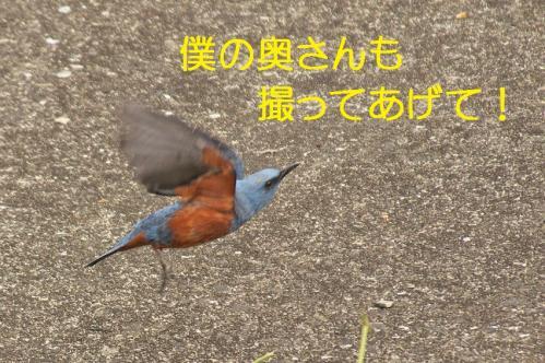 080_20120611231832.jpg