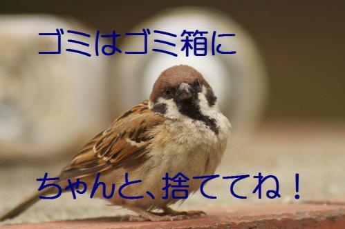 080_20120630222440.jpg