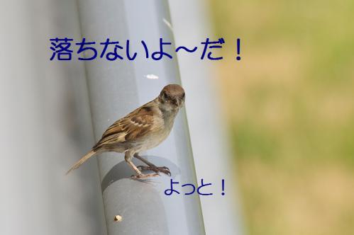 080_20120711222549.jpg