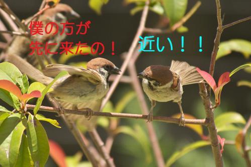 080_20120731204637.jpg