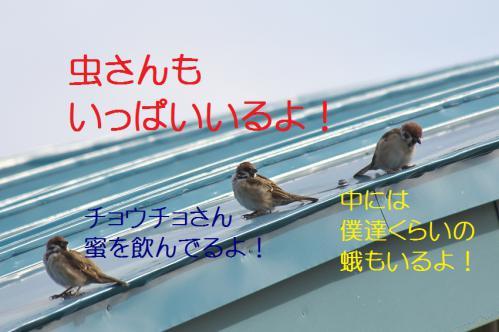 080_20120930203646.jpg