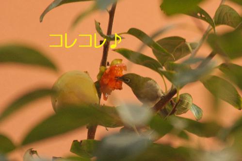 080_20121030223207.jpg
