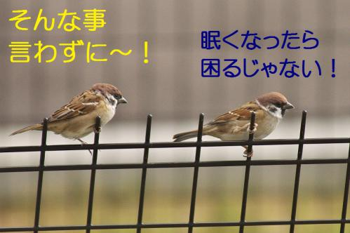 080_20121103224852.jpg